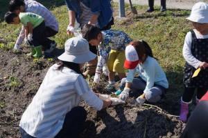 市川農場 農作業体験