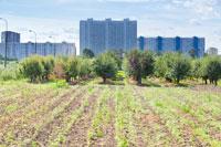 三大都市圈の特定市の市街化区域農地