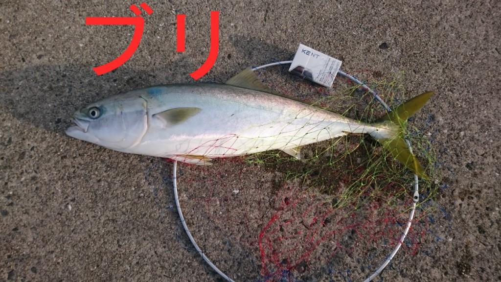 また和歌山県に釣りに