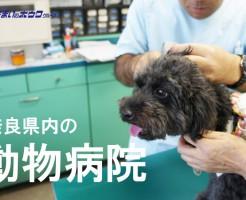 奈良県内の動物病院・獣医さん一覧