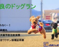 奈良県のドッグランリスト