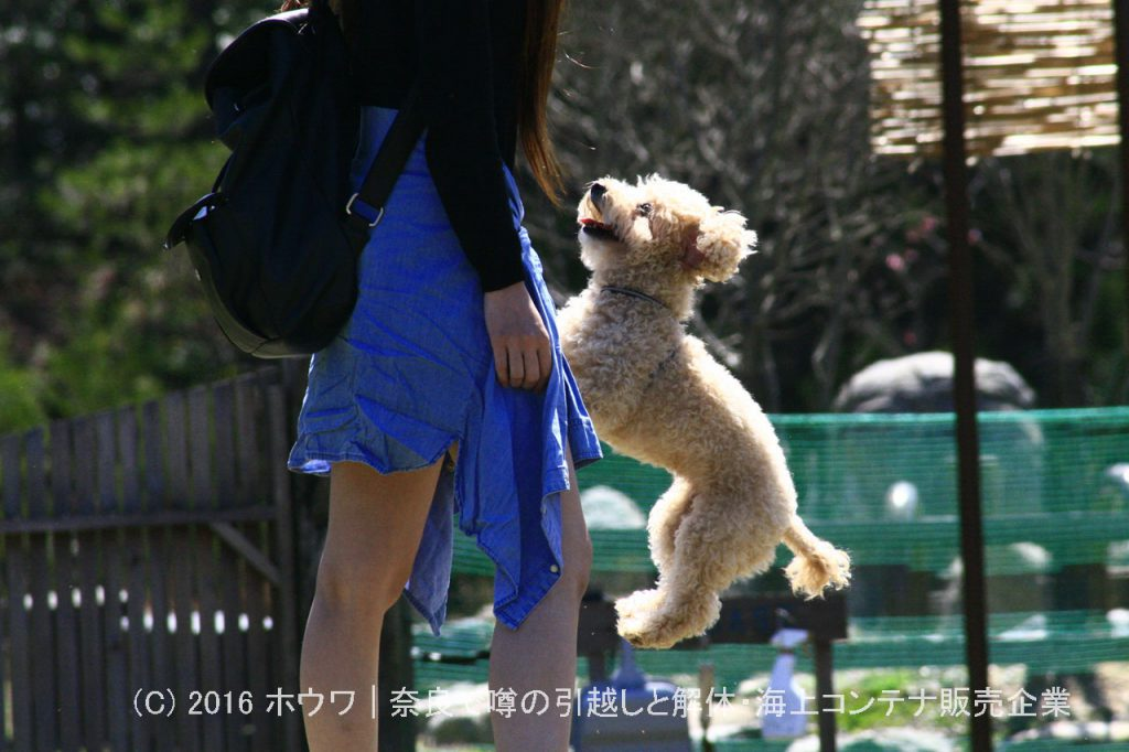 コンテナハウスでドッグラン | 奈良県天理市のDog Base ドッグベース様