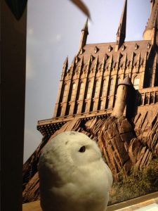 ホグワーツの写真を見上げる白いフクロウ