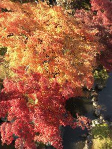 橋の上から見た赤と黄の紅葉