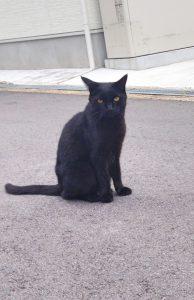 こちらを見つめる真っ黒な猫