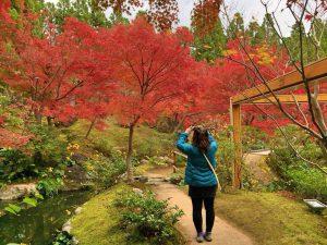 一昨年の美しい紅葉の写真を撮影する川崎の後ろ姿