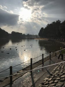 雲の隙間から陽が射し神々しく鴨が泳ぐ池の水面を照らしていました
