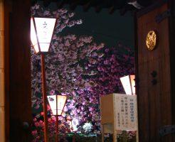 広陵町 新家長福寺の八重桜