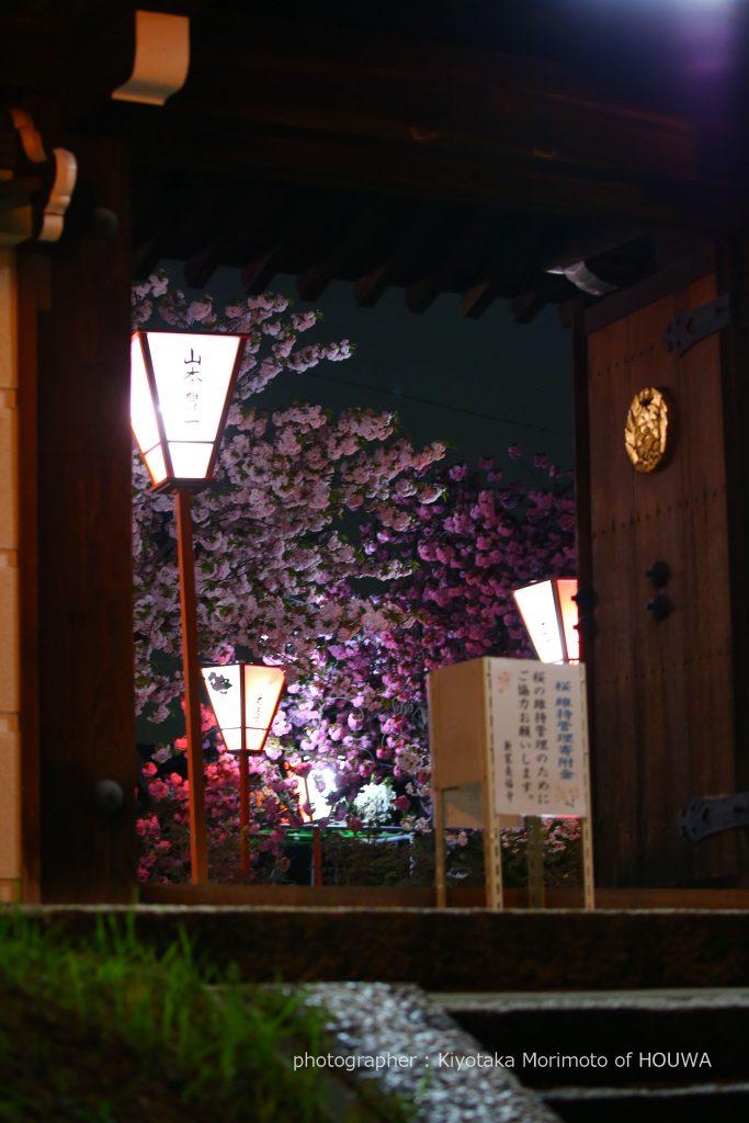 2017年 奈良の桜