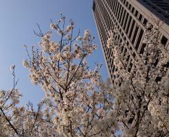 大阪の桜とビルと青空