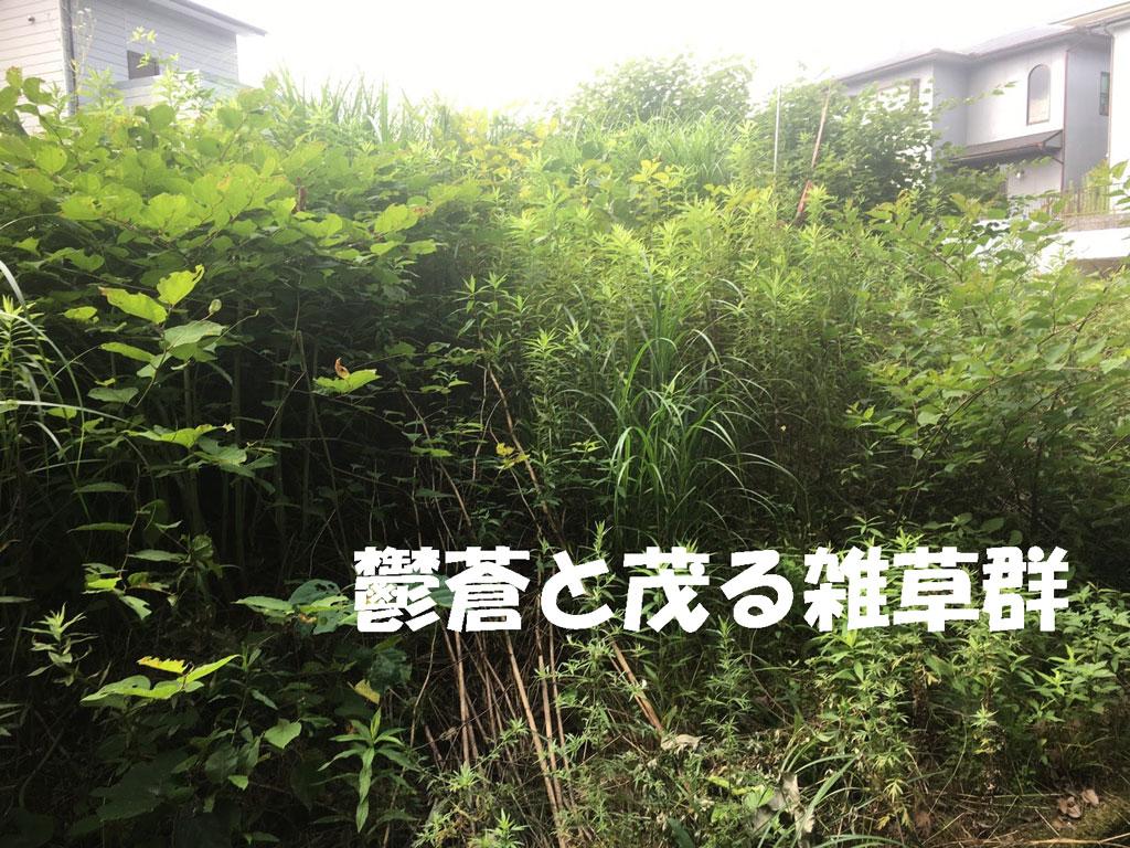 鬱蒼と茂る雑草