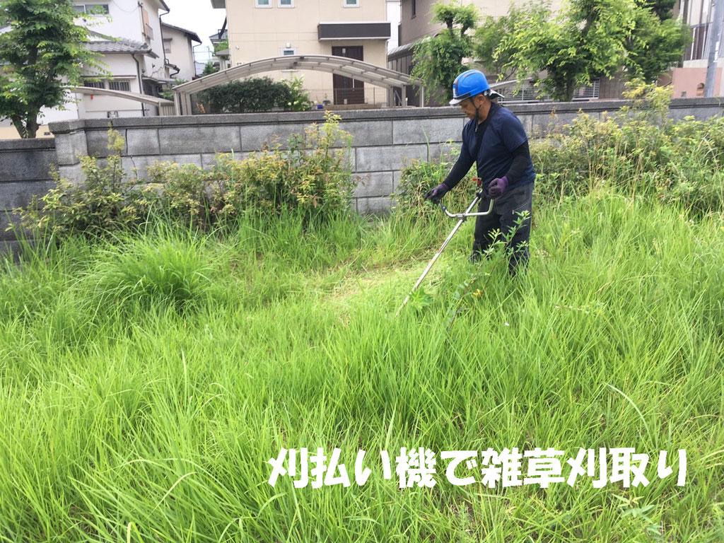 奈良市で雑草の刈取り