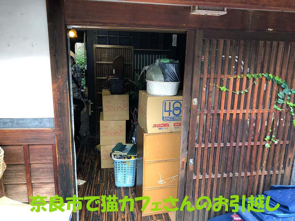 奈良市で猫カフェのお引越