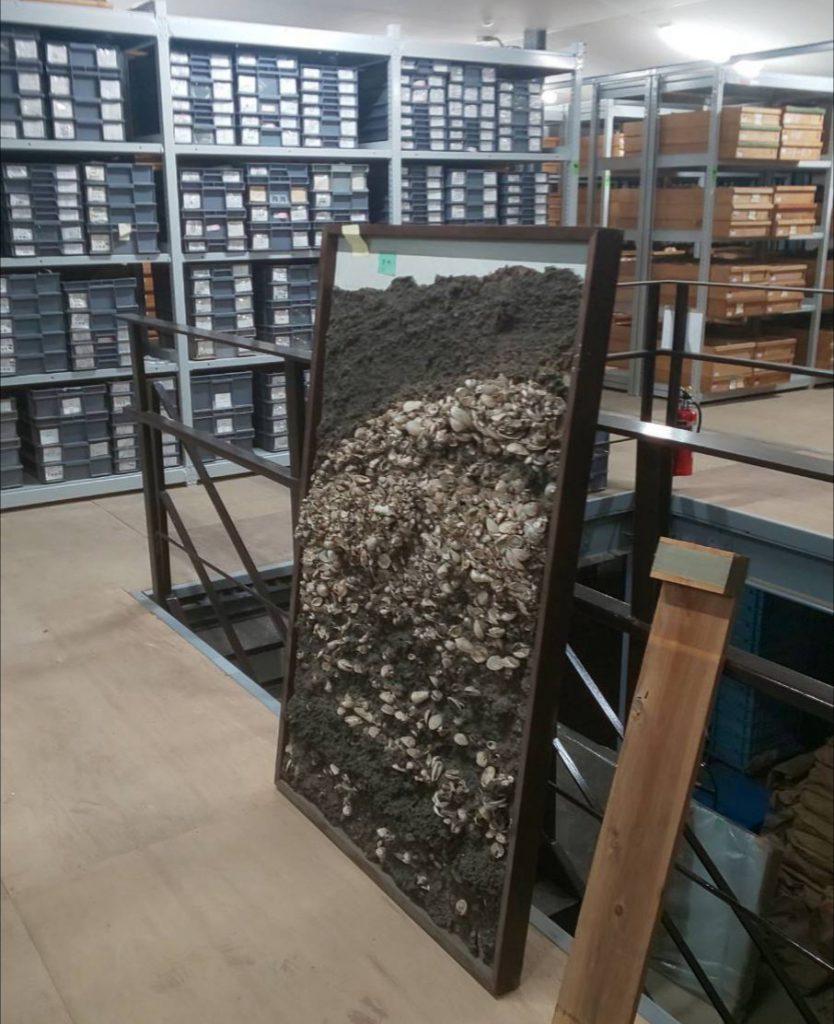 剥ぎ取り標本の運搬 | 奈良文化財研究所 様