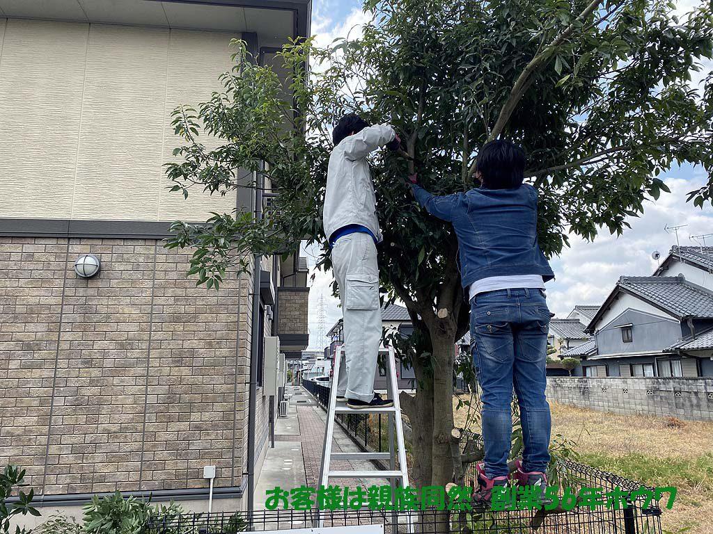 ハイツのオーナー様よりリピート依頼 樹木伐採 | 磯城郡川西町